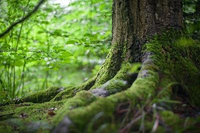 environment-forest-grass-leaves-grounding (1)